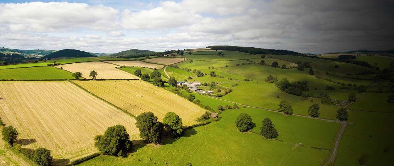 Farmland market levelling out, despite year of political and economic turmoil | Strutt & Parker